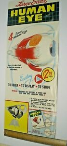 "1960 PYRO MODEL KIT ""THE HUMAN EYE""  STORE SIGN DISPLAY POSTER L@@K!"
