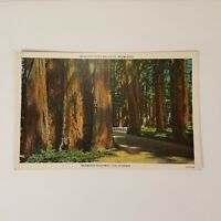 "Vintage Majestic Redwoods Highway California Linen Postcard 3.5""x5.5"" Post Card"