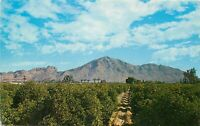 Chrome Postcard AZ I425 Phoenix Camelback Moutain Paradise Valley Orchids Trees