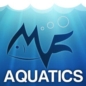 Koi/Tench/Rudd/Orfe/Carp/Ghost/Goldfish/Shubunkin/Comet/Barbel 5cm - MF Aquatics