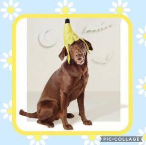 NWT Hyde and Eek! Boutique Pet Yellow Banana Costume Set Headpiece XL 90+ Lbs