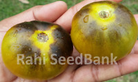 Wagner Blue Green - Tomato One of the Most Rare, Unique Tomato Variety -10 Seeds