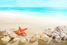 SEA SHELLS STARFISH BEACH * QUALITY CANVAS PRINT