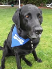 Personalised Dog Bandana ANY NAME PRINTED Lovely Gift Slide on