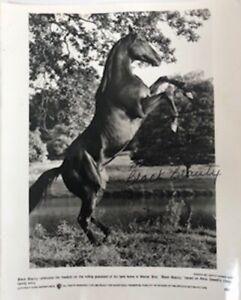 Rare Vintage Original Black Beauty Photograph. 1994