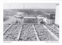 """*Postcard-""""Fresh Grapes"""" (Shipment to Winery) *Temecula Wine Country (A95-1)"""