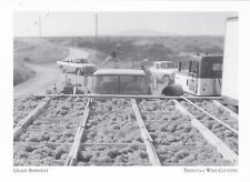 """*Postcard-""""Fresh Grapes"""" (Shipment to Winery) *Temecula Wine Country (#172)"""
