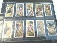 1932 WILD BIRDS crow blackbird Complete Player Tobacco Card Set 50 cards lot