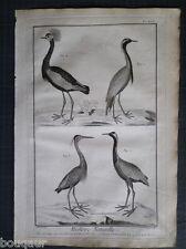 Grue Héron & Oiseau Royal - Histoire Naturelle 18e s. Gravure ORIGINALE in-folio