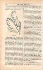 Nepenthes plante carnivore climat tropical Inde GRAVURE ANTIQUE OLD PRINT 1838