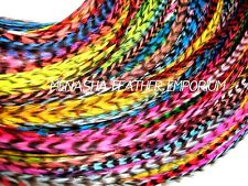 Feather hair extensions Grizzly EUROHACKLE Whiting Farms  beads DIY 20p Kit