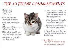 Les 10 commandements féline poster / print / photo