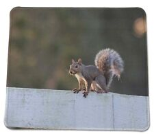 Squirrel on Guard :)  wildlife Country Anti slip COMPUTER MOUSE PAD 9 X 7inch