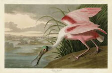 Roseate Spoonbill John James Audubon Wildlife Bird Nature Print Poster 11x14