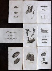 Thomas Pennant 1812 Lot of 9 Antique Sea Life Prints. Book Plates