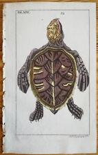 Wilhelm Handcolored Print Amphibian Turtle (4) - 1800