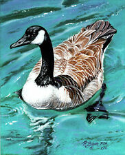 """Canada Goose"" Waterfowl Art Print 8x10 Giclee Image by Artist Roby Baer PSA"