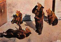 BF39415   bern switzerland   bear ours   animal animaux
