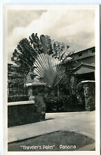 Postcard Rppc Traveler'S Palm Panama unused R7