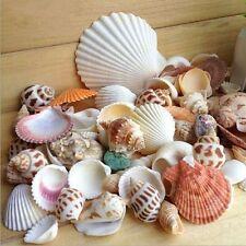 100g Mixed Beach SeaShells Mix Sea Shell Craft SeaShell Natural Aquarium Decor~*