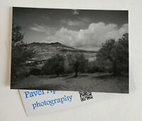 Signed collectible postcard with photograph by Pavel Apletin Vulture Italy