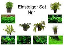 débutant Set mit 6 Simple TROPICA Pot de plantes aquariumpflanzenset nr.1