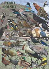 Ptaki polski - dekoracyjny plakat A2 + plakat GRATIS + darmowa wysyłka!