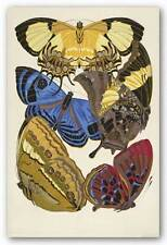 INSECT ART PRINT Collection Butterflies IV Winter Works