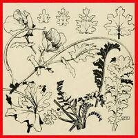 1896 Borders Stencils Design Tile Plants CD Art Nouveau
