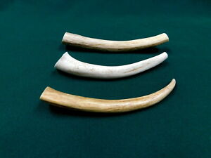 """3 SOLID 6""""- 7"""" Whitetail Deer Antler Dog Chews ~ WHAT YOU SEE IS WHAT YOU GET!!"""