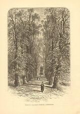 England, Cambridge, Trinity College Avenue, Vintage, 1878 Antique Art, Print.