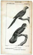 1816 Turpin Perroquets Parakeets Copper Engraving Antique Bird Zoology Print