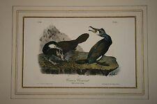 First Edition JT Bowen Lithograph after Audobon - Common Cormorant N. 83 Pl. 415