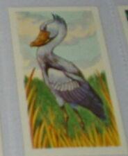 #14 shoebill or whale-head card