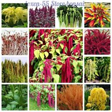 100 Amaranth Flower Seeds Tampala Bledo Foxtail 30 Kinds Beautiful Bright Plants