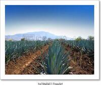 Lanscape Tequila Art Print / Canvas Print. Poster, Wall Art, Home Decor