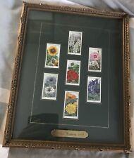 Antique Wills Cigarettes Trading Cards Garden Flowers1925 Framed