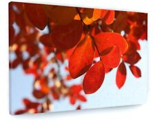 STUNNING RED AUTUMN TREE LEAVES CANVAS PICTURE PRINT CHUNKY FRAME #4139