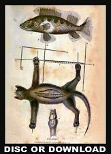 ☆ TAXIDERMY - Animal, Fish, Trophy Mounting, Stuffing - Many Book Scans, DVD-Rom