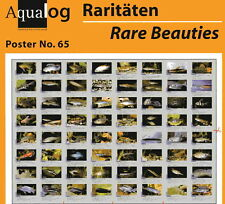 AQUALOG - Fold Poster Rare Tropical Fishes