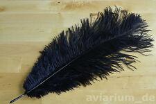 Schöne Straußenfeder Straußenfedern Federn 2 Stk. 30-35 cm schwarz