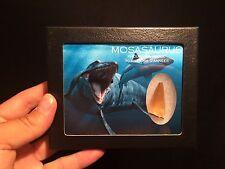 Boite vitre verre avec Dent de Mosasaurus fossile  / tooth fossil box!