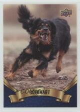 2018 Upper Deck Canine Collection Blue Hovawart #218 0n8