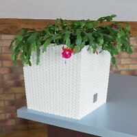 White Small Rattan Square Plant Flower Pot Garden Home Pots Planter Herb 17cm