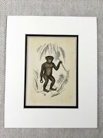 1853 Antique Print Chimp Monkey Chimpanzee Original Victorian Art