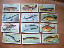 Fish/ Sea