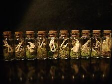 LOT OF 10 GLASS CURIO BOTTLES real animal bones VICTORIAN GOTHIC STEAMPUNK JARS
