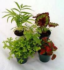 12 Assorted Live Potted Plants with Free Shipping!