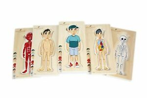 Discoveroo Body Layer Puzzle - Boy 3+