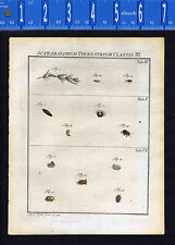 BUGS-INSECTS - Scaribaeorum Terrestrial -Rosel Insecten 1749 Engraved Print